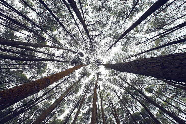 In a forest, looking up.