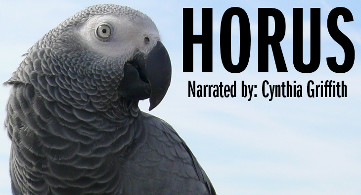 African Grey Parrot - Horus. Narrated by Cynthia Griffith