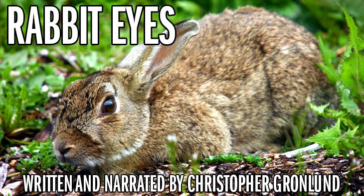Rabbit on the ground -- staring. Rabbit Eyes, written and narrated by Christopher Gronlund