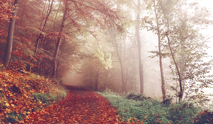 A leaf-covered trail through the misty woods